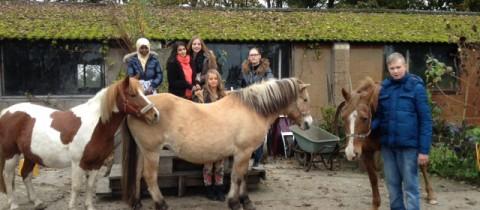 foto's paardrijden periode 1 2015-2016